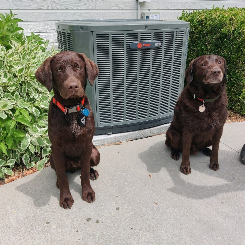 two dogs in front of air conditioner